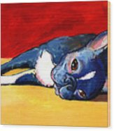 Sleepy Boston Terrier Dog  Wood Print