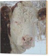 Sleepy Winter Cow Wood Print