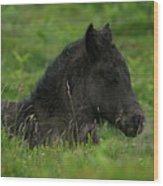 Sleepy Dartmoor Foal Wood Print
