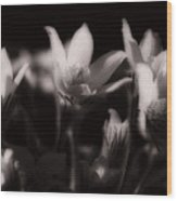 Sleepy Flowers Wood Print