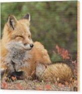 Sleepy Fox Wood Print