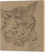 Sleepy Kitty Wood Print