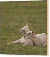 Sleepy Lamb Wood Print