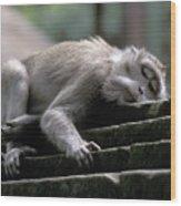 Sleepy Monkey In Monkey Forest Ubud Bali Wood Print