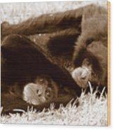 Sleepy Monkeys Wood Print