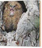 Sleepy Owlet Wood Print