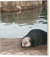 Sleepy Sea Otter Wood Print