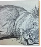 Slepping Lion Wood Print