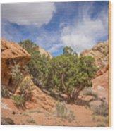 Slick Rock Wood Print