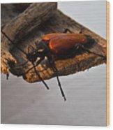 Sliding Beetle Wood Print