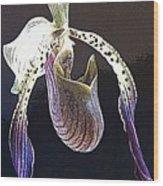 Slipper Orchid Wood Print