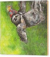 Sloth Birthday Party Wood Print