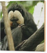 Sloth Wood Print