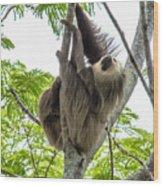 Sloth1 Wood Print