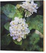 Small Blossoms 4948 Idp_2 Wood Print