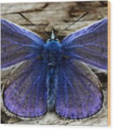 Small Blue Butterfly On A Piece Of Wood In Ireland Wood Print