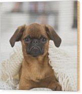 Small Brabant Griffon, Petit Brabancon, Dog  Wood Print
