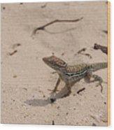 Small Brown Lizard Sitting On A White Sand Beach Wood Print