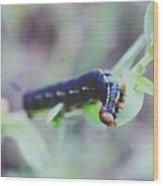Small Bug Wood Print