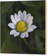 Small Daisy Wood Print