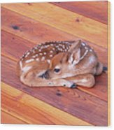 Small Deer Fawn Resting On Cedar Wood Deck Wood Print