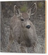 Small Fawn In Tombstone Wood Print