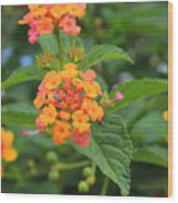 Small Flowers On A Tree Wood Print