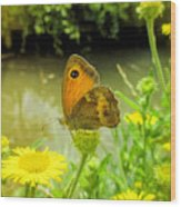 Small Heath Butterfly Wood Print