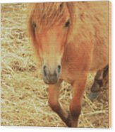 Small Horse Large Beauty Wood Print