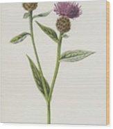 Small Knapweed  Wood Print