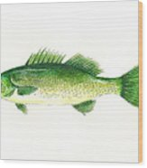 Small Mouth Bass Wood Print