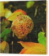 Small Mushroom In Autumn Wood Print