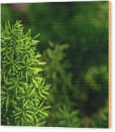 Small Plants Wood Print