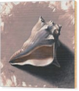 Small Seashell Wood Print by Timothy Jones