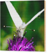Small  White Cabbage Butterfly Pieris Rapae Wood Print