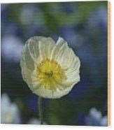 Small White Poppy Wood Print