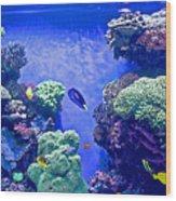 Smaller Fish In Monterey Aquarium-california  Wood Print