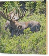 Smiling Bull Moose Wood Print