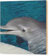 Smiling Dolphin Wood Print