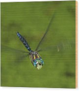 Smiling Dragonfly Wood Print