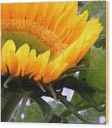 Smiling Flower Wood Print