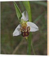 Smiling Orchid Wood Print