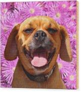 Smiling Pug Wood Print