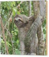Smiling Sloth Wood Print