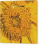 Smiling Sunflower Wood Print