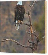 Smith Rock Bald Eagle Wood Print