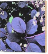Smoke Tree Blues Wood Print