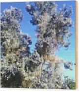 Smoke Tree In Bloom With Blue Purple Flowers Wood Print