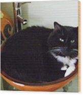 Smokey In Wash Bowl Wood Print