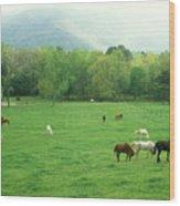 Smokies Horses Wood Print